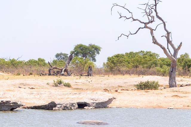 el canal de savuti parque nacional chobe botswana (28)