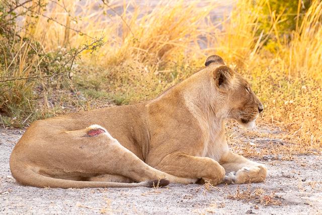 el canal de savuti parque nacional chobe botswana (3)