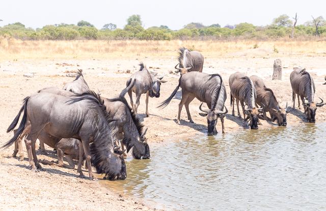 el canal de savuti parque nacional chobe botswana (31)