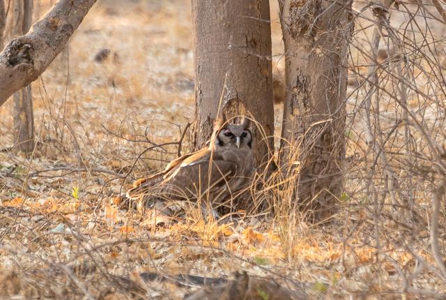 el canal de savuti parque nacional chobe botswana (38)