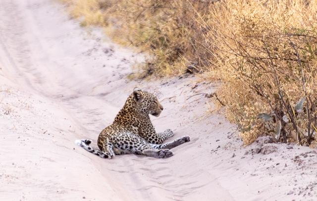 el canal de savuti parque nacional chobe botswana (47)