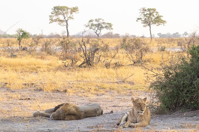 el canal de savuti parque nacional chobe botswana (6)