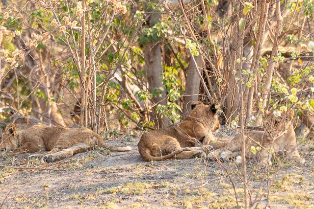 el canal de savuti parque nacional chobe botswana (8)