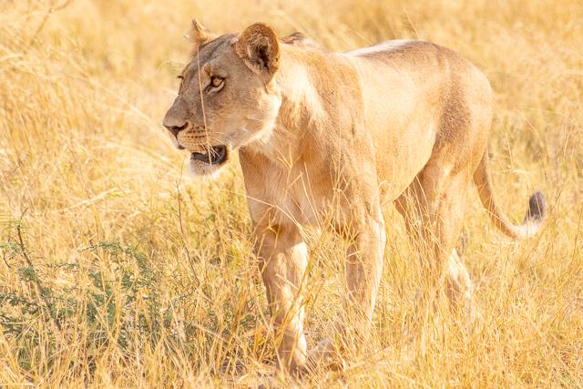 el canal de savuti parque nacional chobe botswana (9)