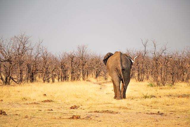 reserva savuti botswana atardecer (12)