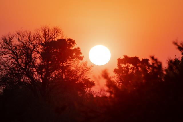 en busca de un rinoceronte en botswana moremi (1)