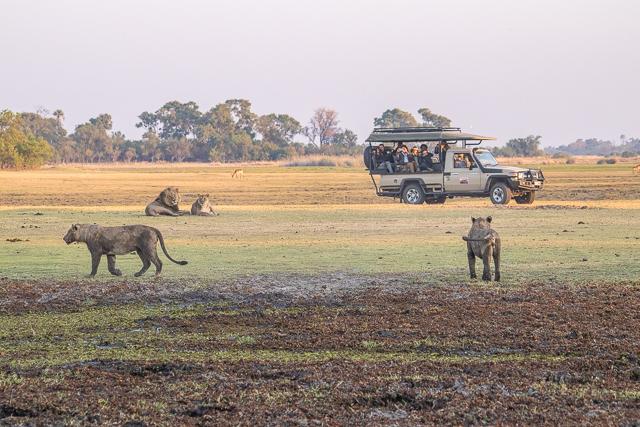 en busca de un rinoceronte en botswana moremi (13)