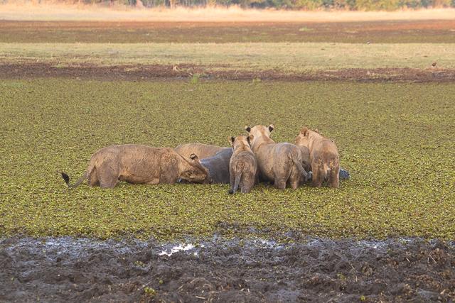 en busca de un rinoceronte en botswana moremi (2)