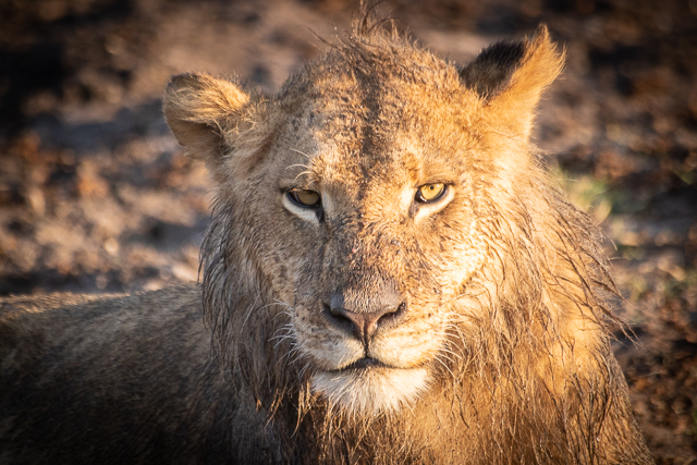 en busca de un rinoceronte en botswana moremi (23)