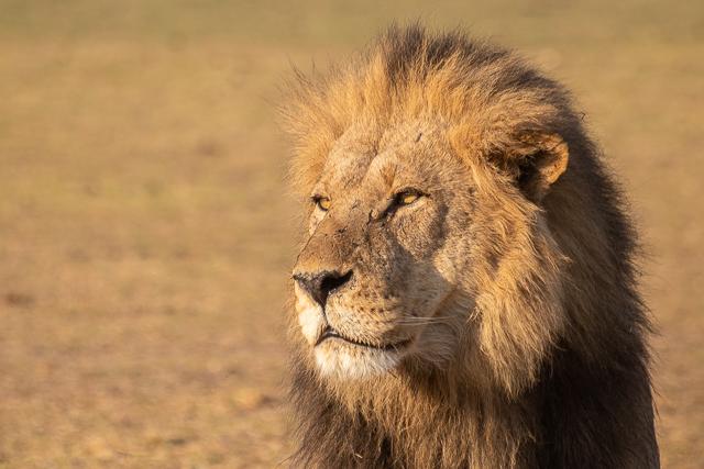 en busca de un rinoceronte en botswana moremi (24)