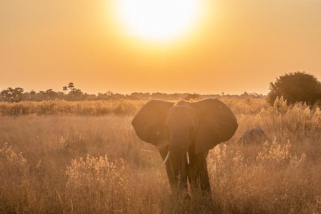 en busca de un rinoceronte en botswana moremi (38)