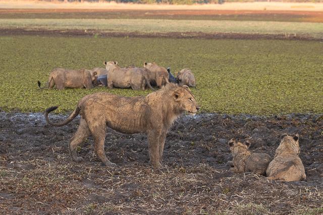 en busca de un rinoceronte en botswana moremi (5)