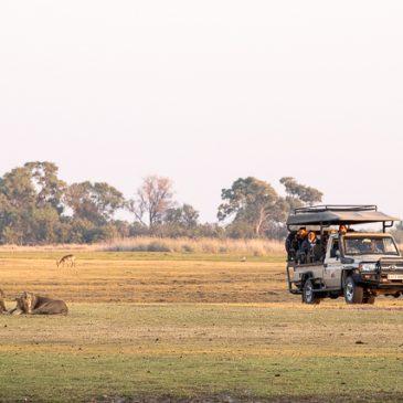 En busca de un rinoceronte en Botswana