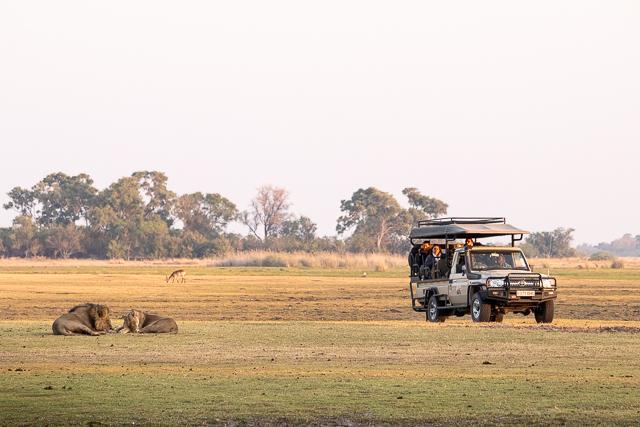 en busca de un rinoceronte en botswana moremi (9)
