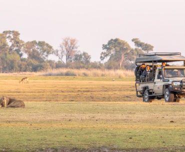 moremi leones buscando un rinoceronte botswana