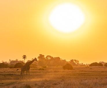 puesta de sol paseo en barca rio khwai botswana