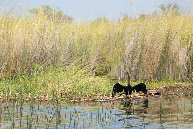 safari en barca por el río khwai (24)