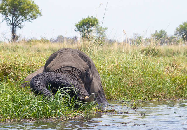 safari en barca por khwai (25)