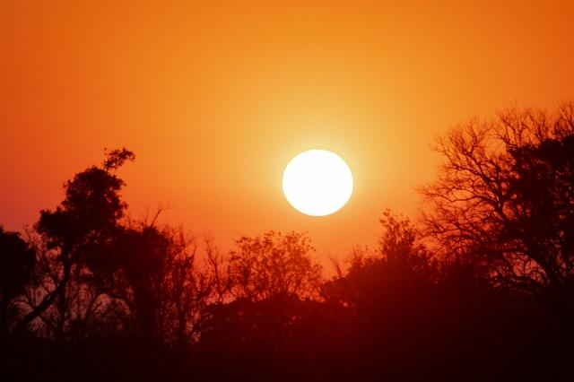 safari moremi botswana (1)