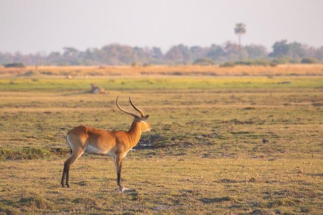 safari moremi botswana (10)