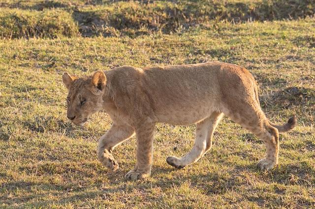 safari moremi botswana (14)
