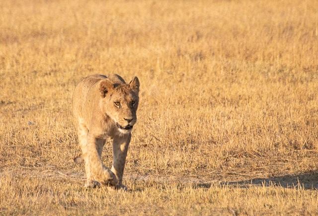 safari moremi botswana (16)