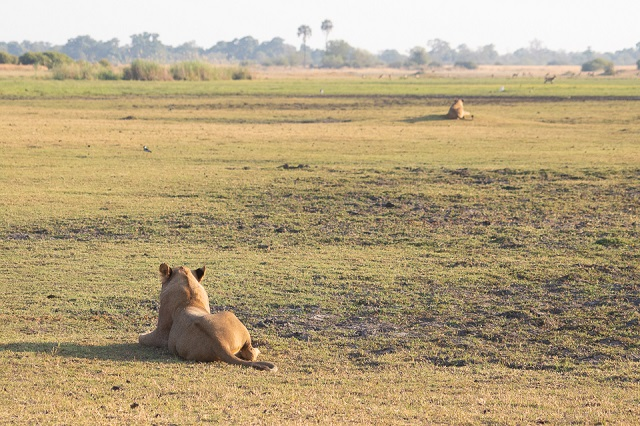 safari moremi botswana (18)