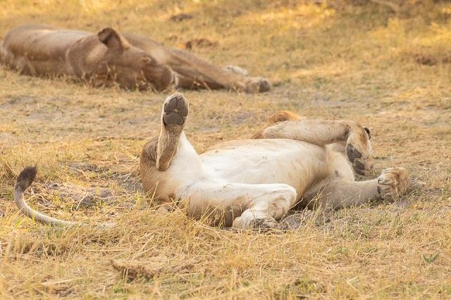 safari moremi botswana (20)