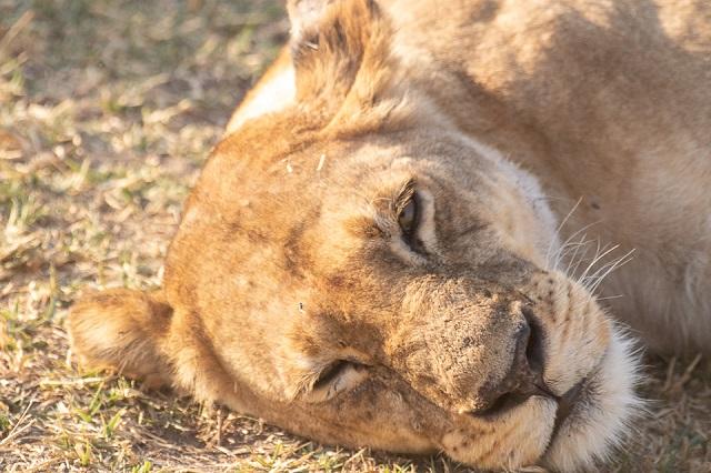 safari moremi botswana (22)