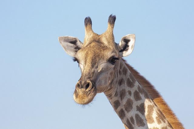 safari moremi botswana (23)
