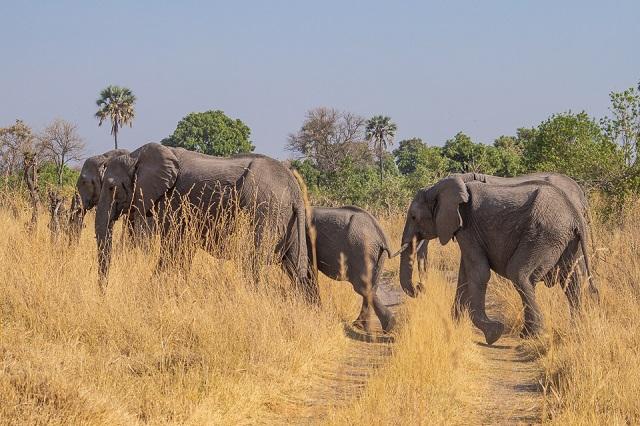 safari moremi botswana (27)