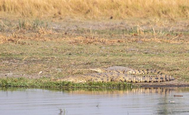 safari moremi botswana (29)