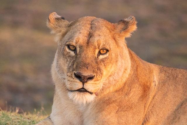 safari moremi botswana (3)