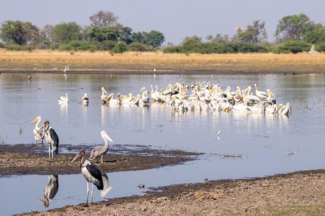 safari moremi botswana (31)