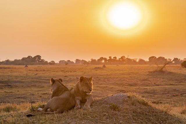 safari moremi botswana (4)