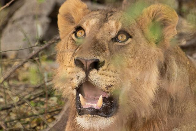 safari moremi botswana (48)