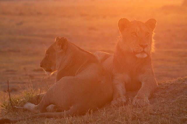 safari moremi botswana (5)