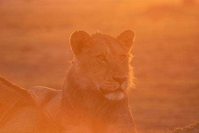 safari moremi botswana (6)