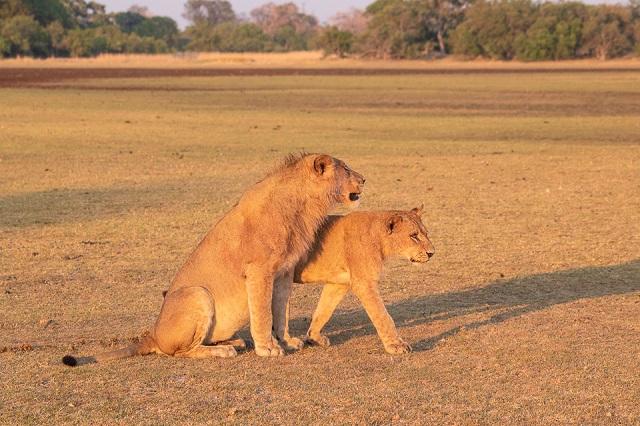 safari moremi botswana (8)