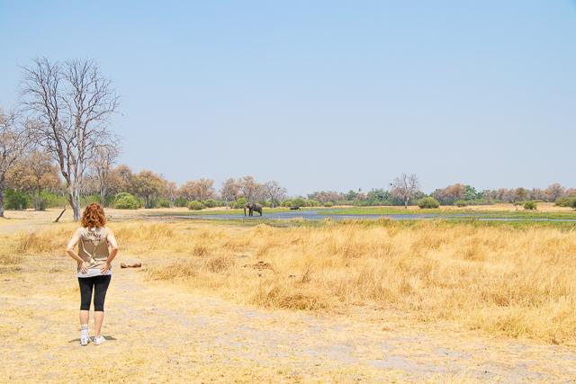safari por la rivera del río khwai (10)