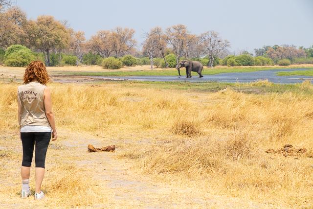 safari por la rivera del río khwai (13)