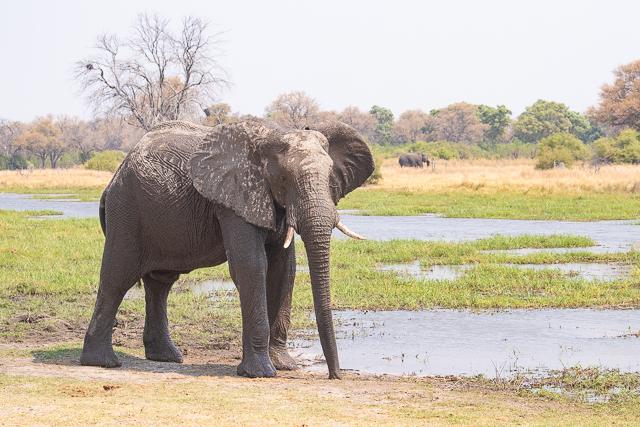 safari por la rivera del río khwai (16)
