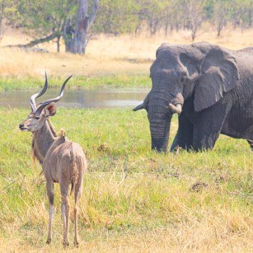 Río Khwai, safari por la ribera del río (Botswana)