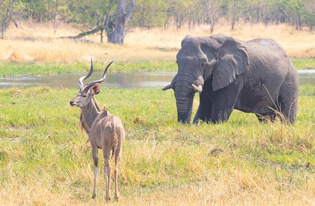 safari por la rivera del río khwai (17)