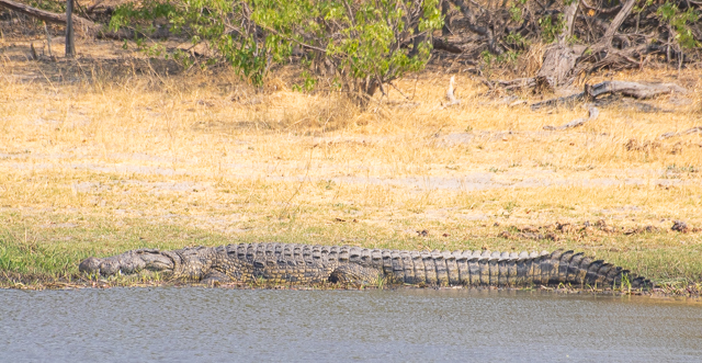 safari por la rivera del río khwai (21)