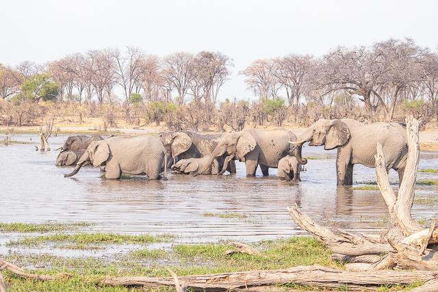 safari por la rivera del río khwai (36)