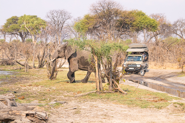 safari por la rivera del río khwai (37)