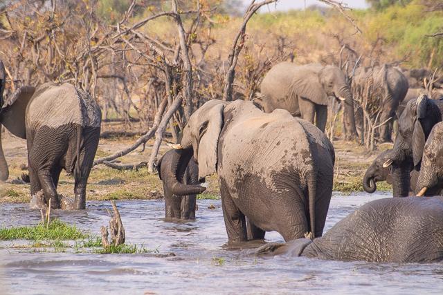 safari por la rivera del río khwai (40)