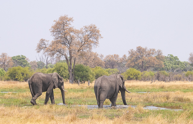 safari por la rivera del río khwai (7)
