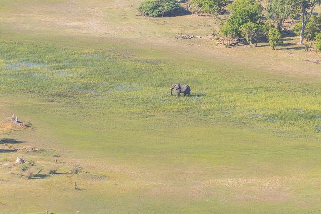 sobrevolar en avioneta el delta del okavango (13)